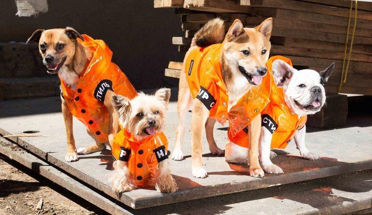 VIP Dogs