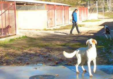 animal-shelter-alcoy